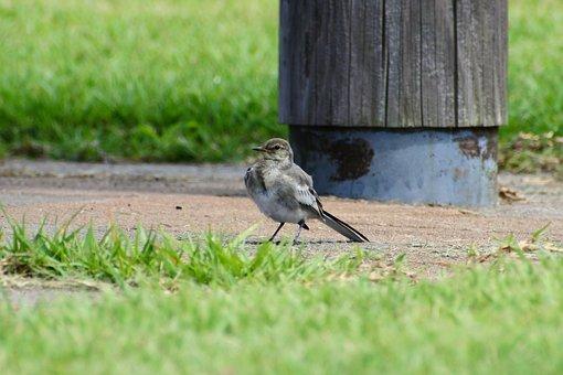 Animal, Park, Plant, Grass, Little Bird