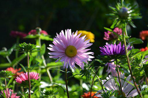 Flowers, Massif, Pretty, Garden, Nature, Bouquet