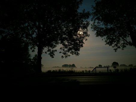 Night, Fog, Full Moon, Shadow, Outlines, Trees, Meadow
