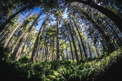 Fisheye, Wide Angle, Trees, Pacific, Mountains, Summer