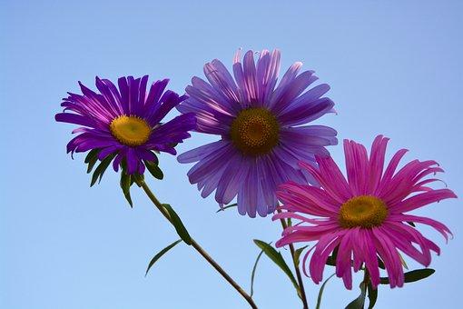 Flowers, Colors, Parma, Violet, Pink, Nature