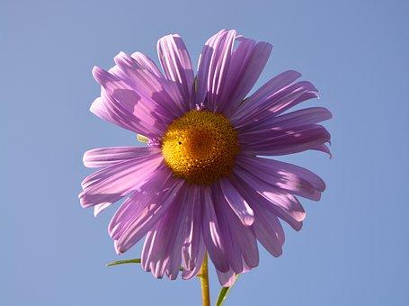 Flower, Petals, Violet, Parma, Yellow, Nature, Plant