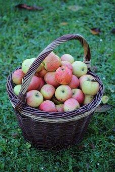 Apple, Basket, Autumn, Harvest, Thanksgiving