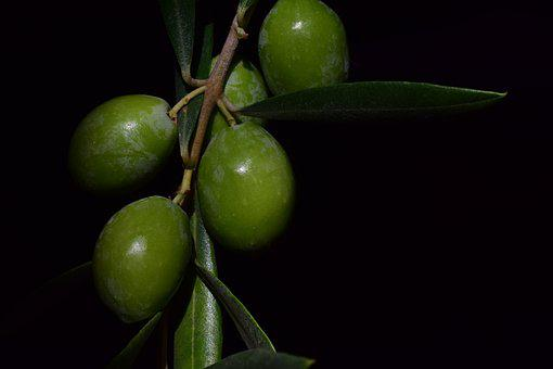 Olive, Nocellara, Nocellara Olive, Food, Oelfrucht