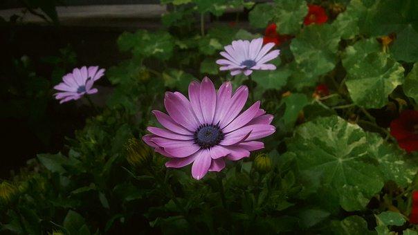 Purple, Purple Flower, Purple Flowers, Krasseblad, Leaf