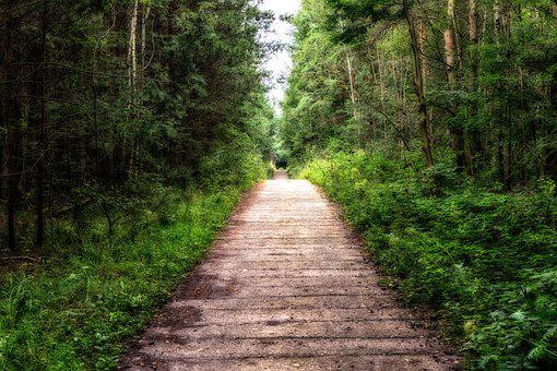Away, Forest, Forest Path, Mood, Trees, Trail, Straight
