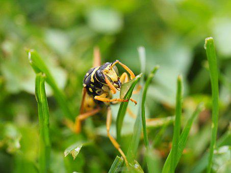 Wasp, Insect, Nature, Close, Animal, Blossom, Bloom