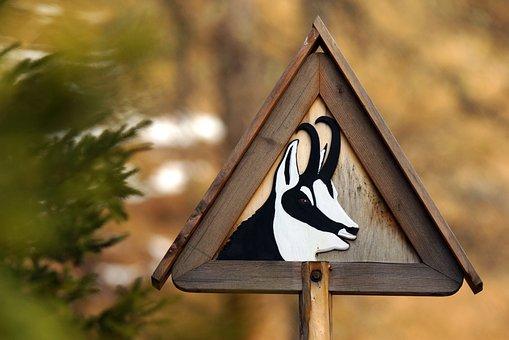 Chamois, Animal, Mountain, Wild, Signal, Road, Danger