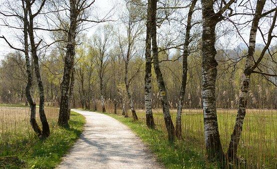 Avenue, Birch, Away, Spring, Trail, Hiking