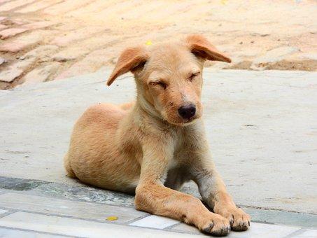 Dog, Puppy, Animal, Cute, Pet, Brown, Fur, Homeless