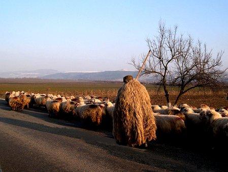 Nature, Spring, Animal, Sheep, Wool, Deer, Christian