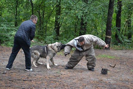 Dog Fight, Fighting Dog, Attack Dog, Dog Owner, Dog