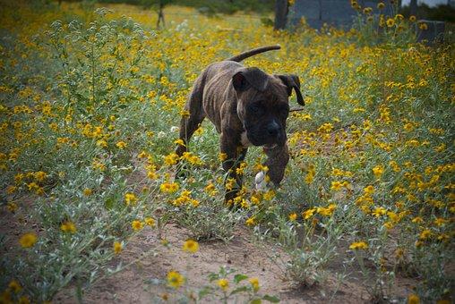 Dog, Pet, Owner, Veterinary, Happy, Animal, Friend, Fun