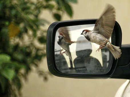 Sparrow, Driving Mirror, Rear View Mirror, Bird
