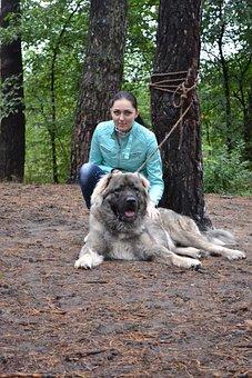 Dog Owner, Dog, Training, Pet, Exercise, Drill