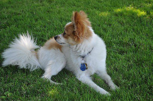 Dog, Puppy, Family, Animal, Fun, Breed, Summer, Happy