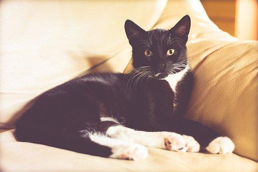 Cat, Kitten, Animal, Futrzak, Black Cat, Golden Eyes