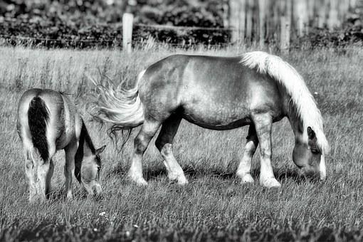 Horse, Foal, Pasture, Mare With Foal