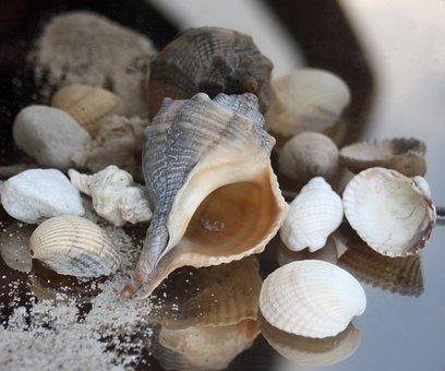 Snail, Housing, Maritime, Sand, Beach, Timeless