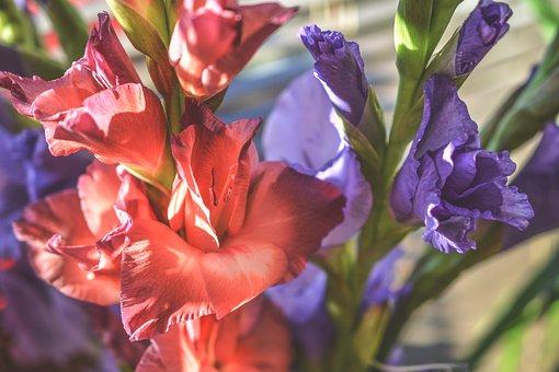 Gladiola, Gladioli, Flowers, Colors, Colorful, Nature