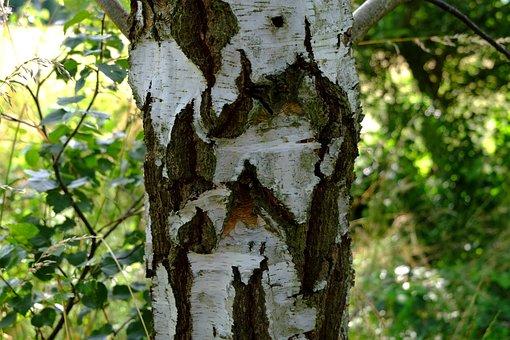 Birch, Bark, Nature, Tree, Log, Tribe, Wood, Tree Bark