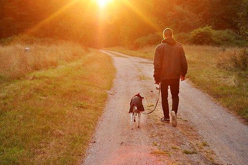 Sunset, Dog, Owner, Man, Nature, Sweden
