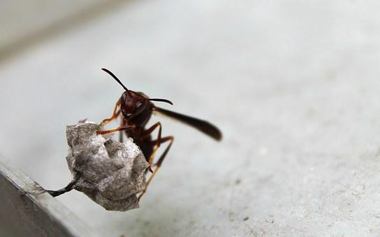 Wasp, Nest, Insect, Dangerous, Antenna, Hive, Macro