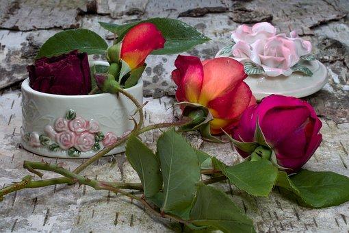 Flowers, Roses, Birch Bark, Pink Rose
