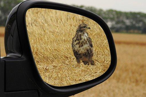 Rear Mirror, Milan, Red Kite, Bird, Raptor