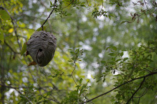 Nature, Wasp Nest, Nest, Wasp, Hive, Stinger, Natural