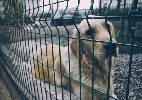 Street Dog, Dog, Streets, Street Animal, Animal, Pet