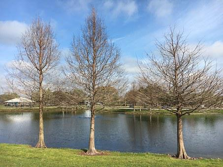 Lake, Nature, Park, Tree, Autumn, There Are No Leaves