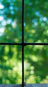 Windows, Square, View, Cross, Green, Tree Bokeh Blur
