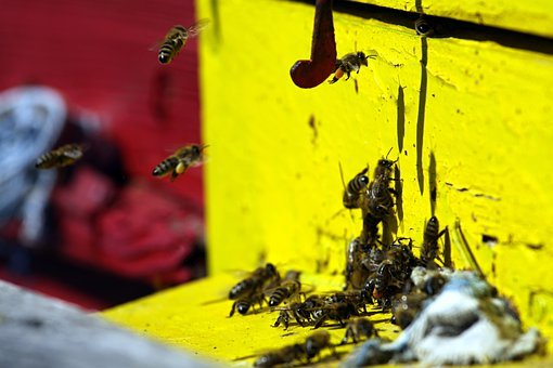 Bees, Work, Insect, Honeycomb, Wax, Beehive, Pollen