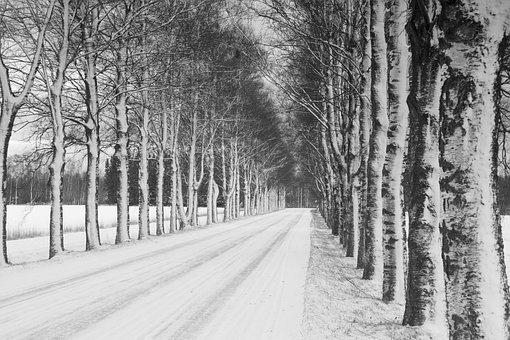Witer, Birch Alley, Birch, Road, Alley, Birch Bark