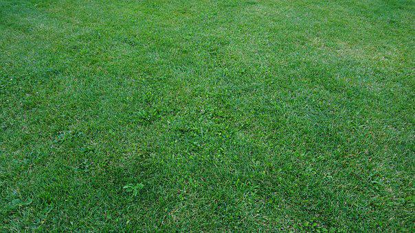 Lawn, Grass, Green, Summer, Nature, Spring, Garden