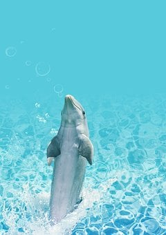 Dolphin, Water, Background, Fish, Swim, Inject, Dance