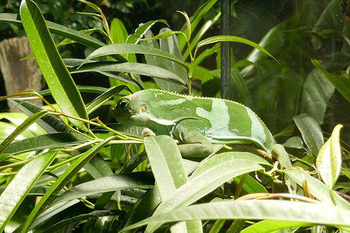 Lizard, Reptile, Plants, Green, Nature, Plant, Vivarium