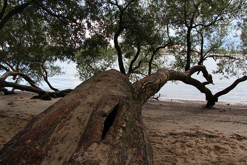 Tree, Beach, Elbe, Sea, Water, Nature, Baltic Sea