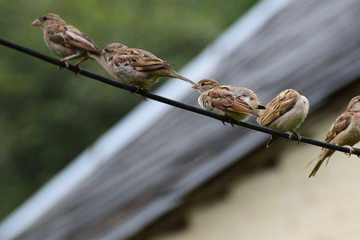 Birds, Cute, Sparrows, Nature, Happy, Love, Pattern