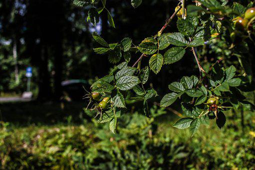 Green, Plant, Wide Angle, Summer, Nature