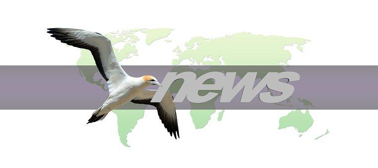 Continents, Earth, Bird, Globe, World, News, Press