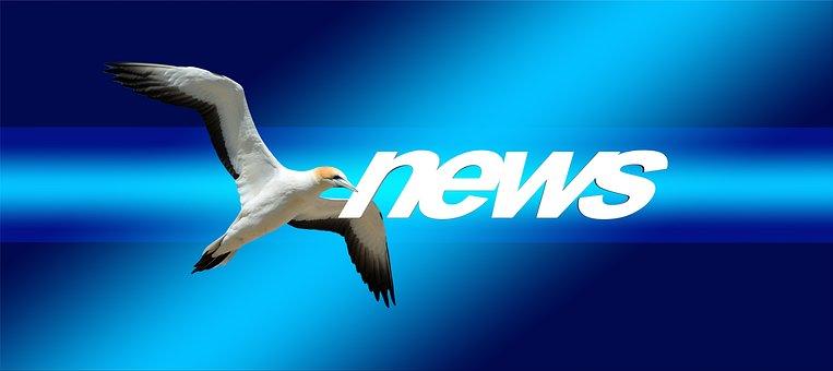 News, Press, Newspaper, Commenced, Northern Gannet