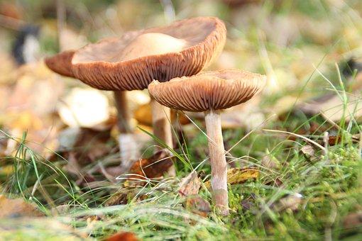 Mushrooms, Three Mushrooms, Mushroom