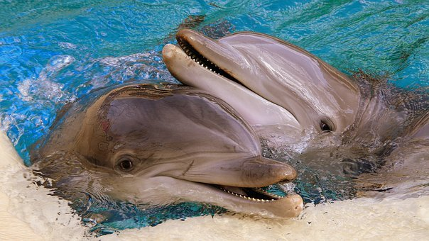 Dolphins, Usa, Las Vegas, Siegfried Roy, Nevada