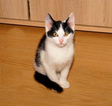 Cat, Young Animal, Animal, Curious, Kitten, Adidas
