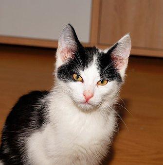 Cat, Young Animal, Animal, Curious, Kitten, Dear