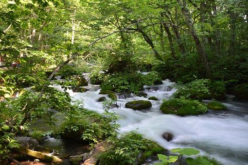 Japan, Green, Nature, Japanese, Asian, Natural, Plant