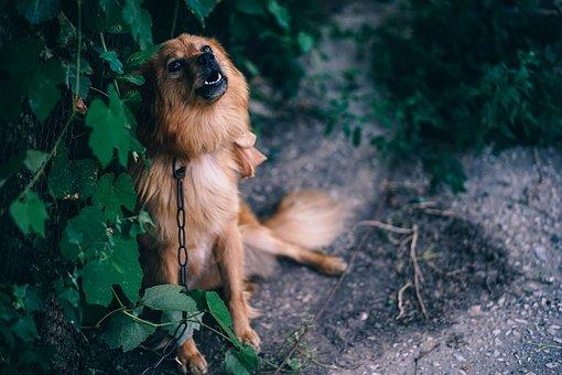 Animal, Attention, Bark, Big, Bitch, Blue, Breed