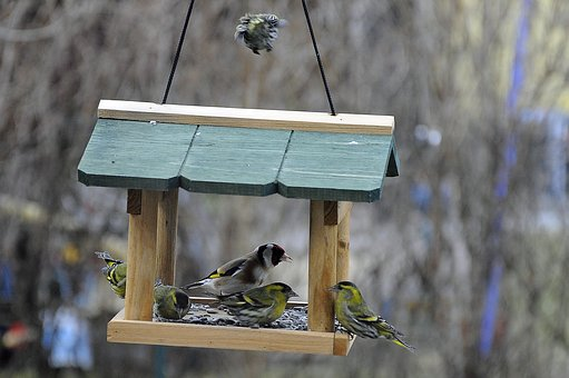 Aviary, Birds, Bird Feeder, Plumage, Food, Spring